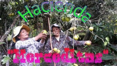 Departamento en Venta en La Paz Achachicala Comunida Chairo Nor Yungas